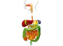 système estomac alimentation nourriture personnes âgées constipation troubles défécation digestion intestins