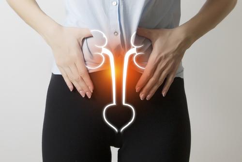 Urètre féminin